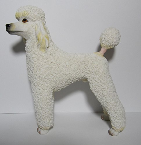 Best Of Breed Dogs – White Poodle