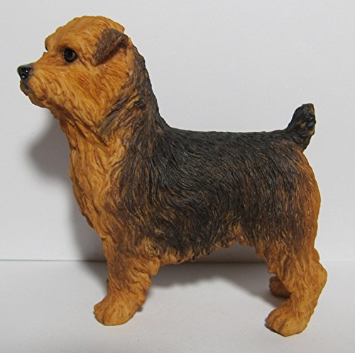 Best Of Breed Dogs – Norfolk Terrier – Black & Tan